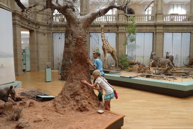 Im Museeum König